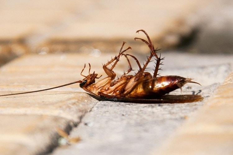 Phương pháp tận diệt gián nhà hiệu quả - Diệt côn trùng Anh Thư