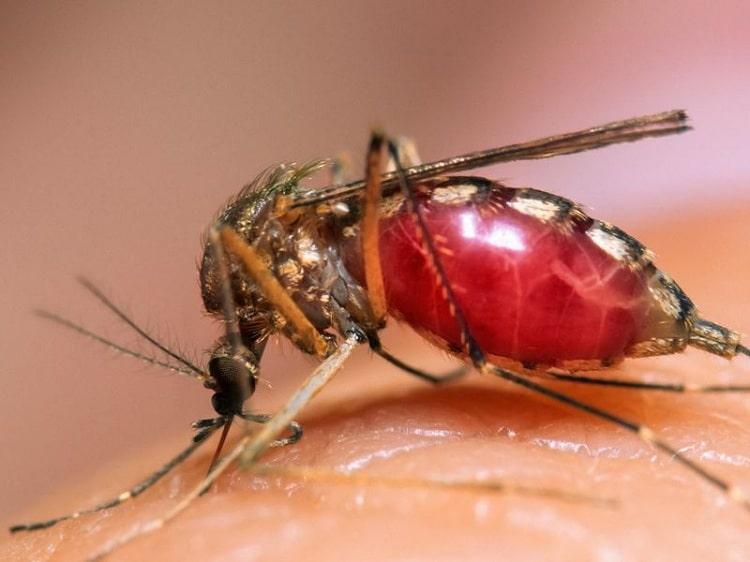 Top những loại côn trùng gây hai trong nhà - diệt côn trùng Anh Thư TPHCM