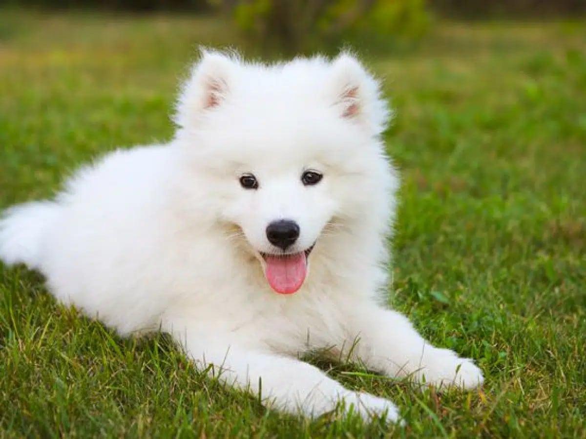 Tặng một chú thú cưng là một món quà rất tuyệt vời