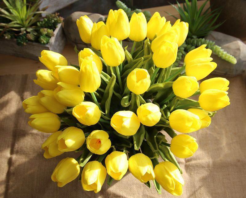 Hoa tulip vàng