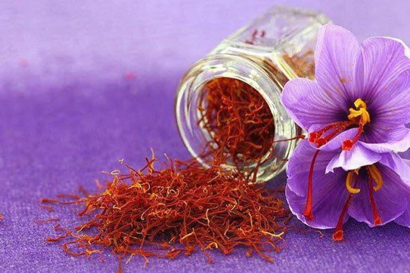 """Nhuỵ hoa nghệ tây được xem như một loại dược liệu - gia vị """"vàng đỏ"""" của Trung Đông"""